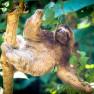 Slots tucans and monkies at Kalon Surf Resort