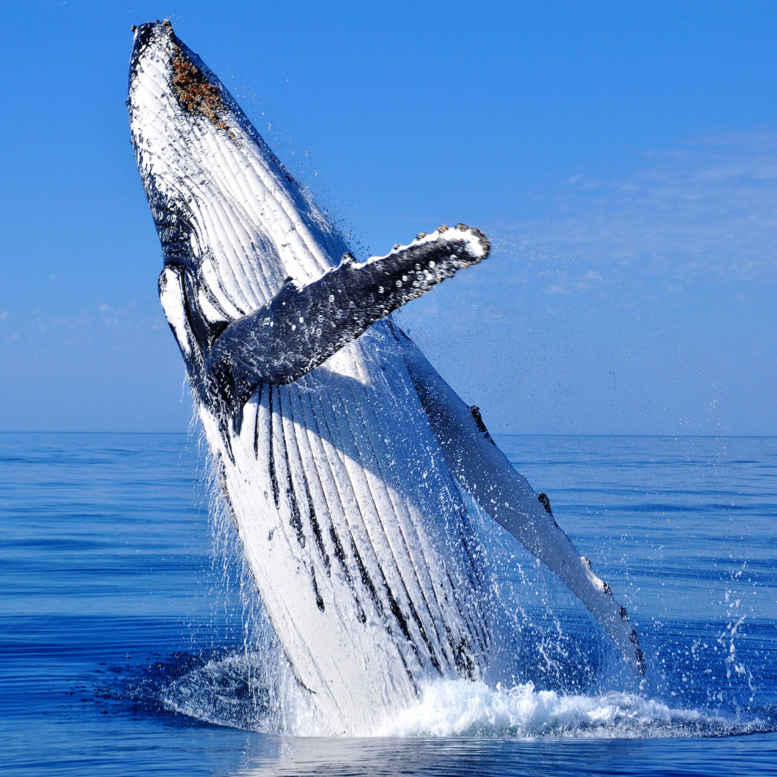 Whale Watching in Bahia Ballena Costa Rica